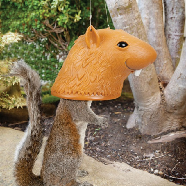 Squirrel feeder... Too cute  http://www.huffingtonpost.com/mobileweb/2012/07/25/big-head-squirrel-feeder-_n_1702251.html