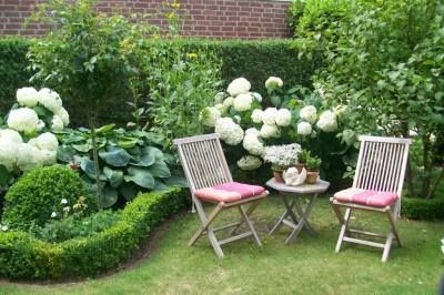 Hortensie Annabell Buchs Hosta ♥ | In the garden | Pinterest