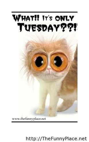 Funny Tuesday Morning Quotes Funny Tuesday Q...