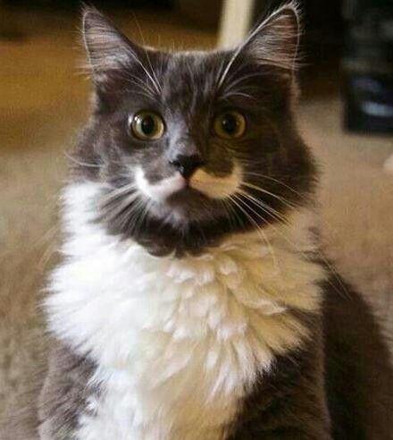 ヒゲが生えてる猫