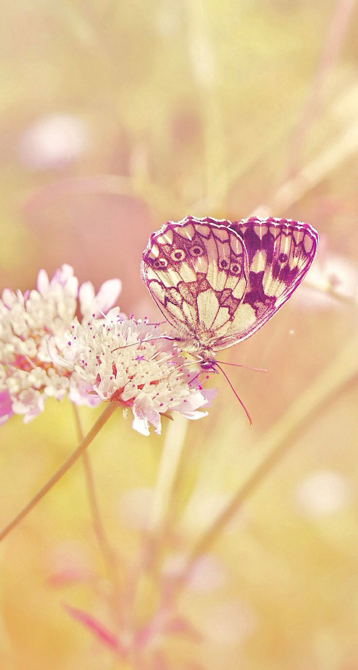 iPhone 5 wallpapers Butterfly Wallpapers Pinterest