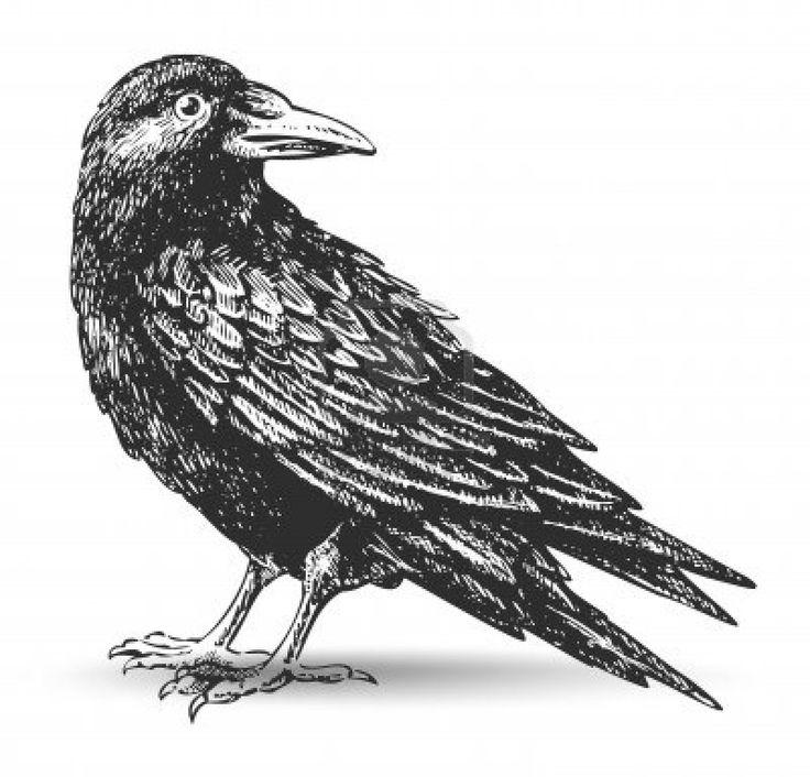 Raven Clip Art Google Search Birds amp Bees Pinterest