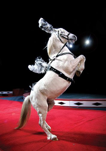 Circus horses water for elephants - photo#27
