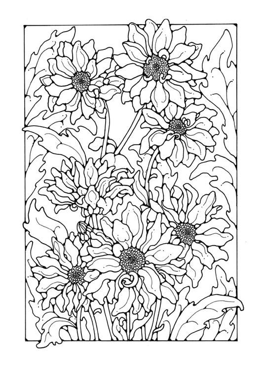 Coloring Page Chrysanthemum Adult Coloring Pages Pinterest Chrysanthemum Coloring Pages