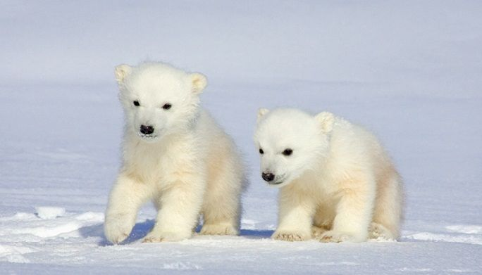 plar nunavut arctic college