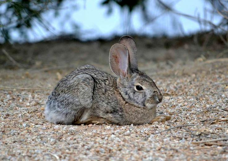 Sweet bunny in az desert by jill baum