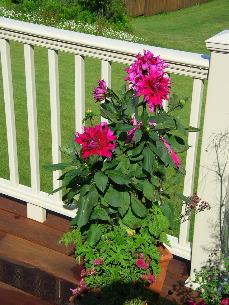 Container garden for full sun containers i created pinterest - Container gardens for sun ...