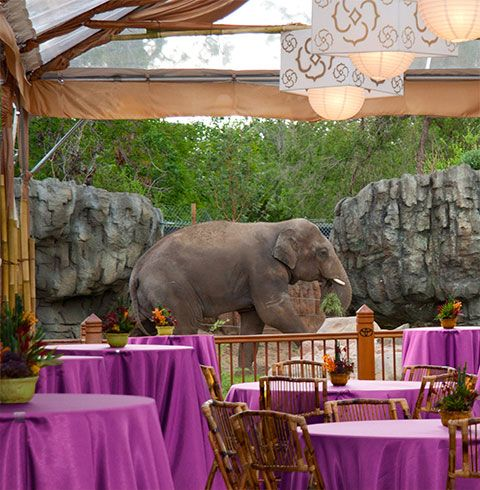 Private Parties  Denver Zoo  Adult Safari, Zoo or Rainforest Themed ...