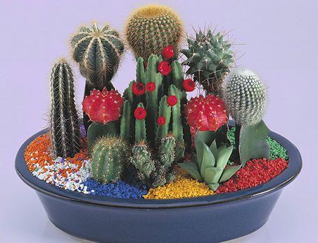 Fotografije kaktusa - Page 3 Df6758864590ce7cc81a52fbee493d6f