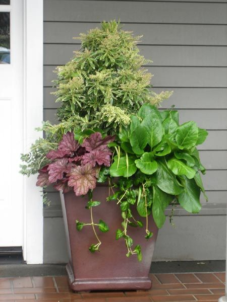 Large container plant by front door outdoor ideas Container plant ideas front door