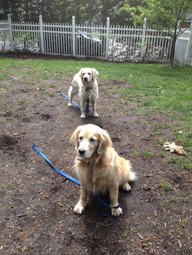 Dog Pee Area In Backyard : Outdoors DOGSCAPING  For My Furbabies