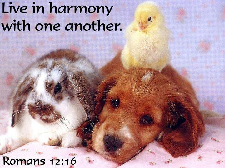 Romans 12:16