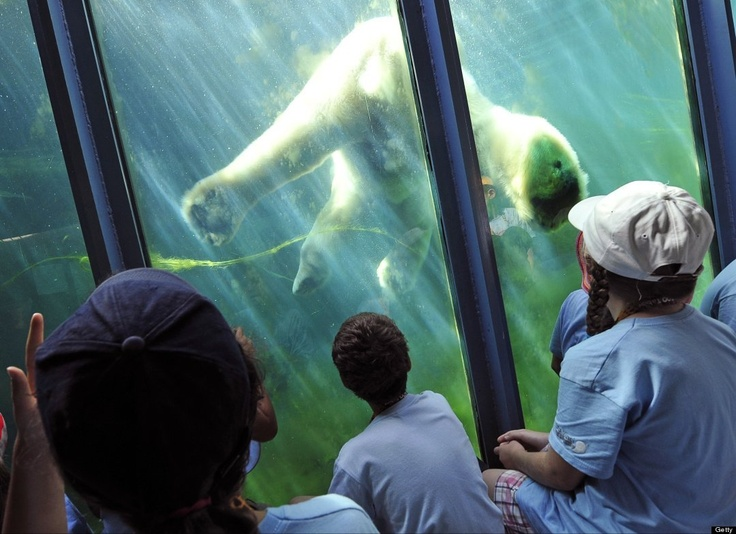 Earth Day, huffingtonpost: Go see the animals! #Earth_Day #huffingtonpost