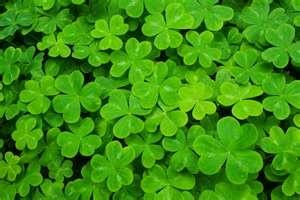 Happy St. Patricks Day everyone