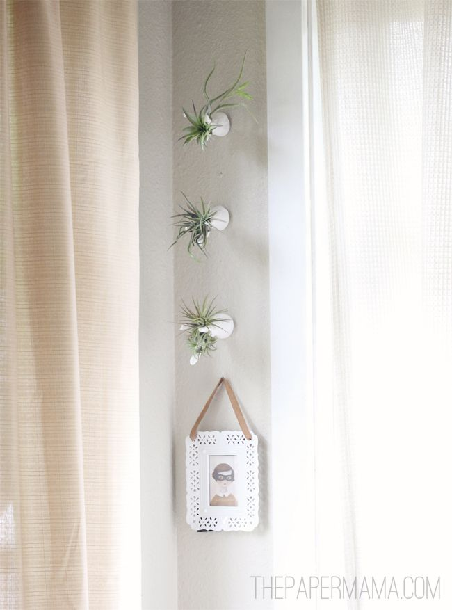 Diy ify air plant wall hanger for Air plant wall hanger