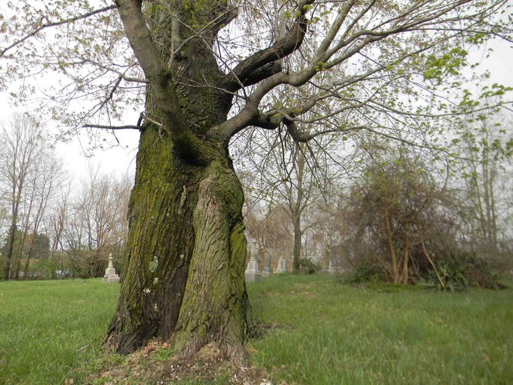 two become one strange wonderful trees pinterest. Black Bedroom Furniture Sets. Home Design Ideas