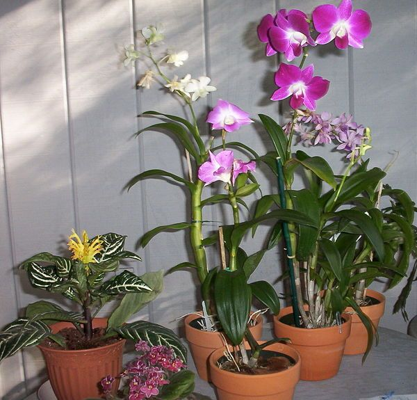 Care For Orchids Outside Pinterest