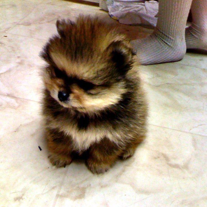 he's so fluffy i'm gonna DIE!!!!!