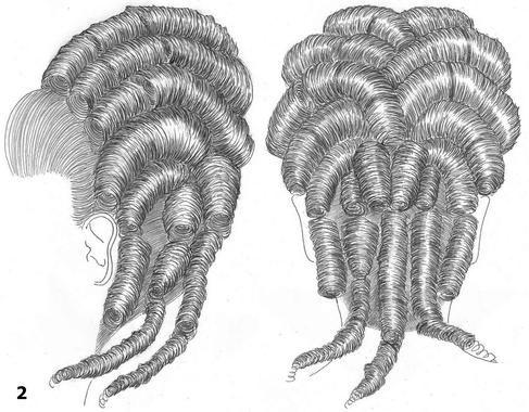 Coiffure moyennement haute, poudrée, oreille dégagée. La partie avant un peu large est coiffée sur l'arrière. De chaque coté de la chevelure. Toute la chevelure est coiffée en longs marteaux de diamètre identique les uns aux dessus des autres dans une disposition presque horizontale mais avec une tendance en forme de fer a cheval.  Dans le bas de la nuque d'une oreille à l'autre des marteaux verticaux, ceux du milieu sont tombants.