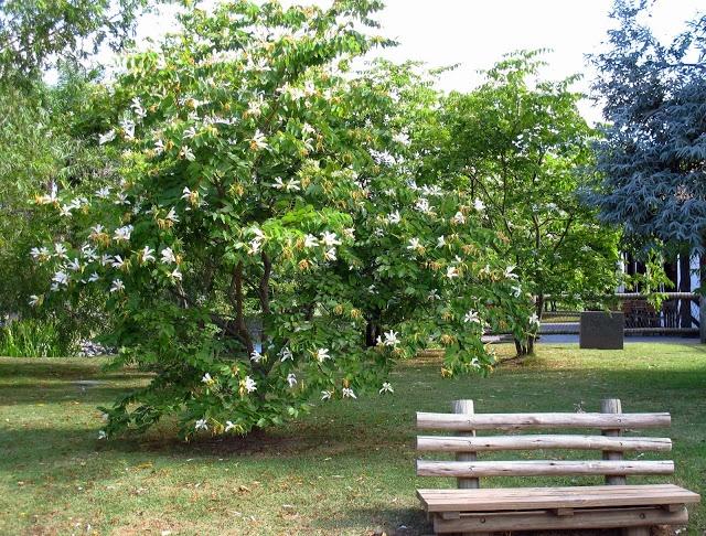 En el jardin bauhinia candicans sentados en el jard n for Camping el jardin tilcara