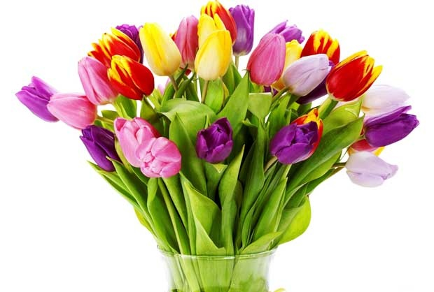 Easter Flowers Guide Flowers Easter Most Popular At