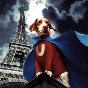Un Superhero pour the luxurious ACTUEL DOGS in Paris