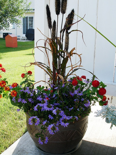 Container arrangement Garden Container Gardening