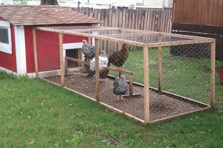 small chicken run chickens pinterest