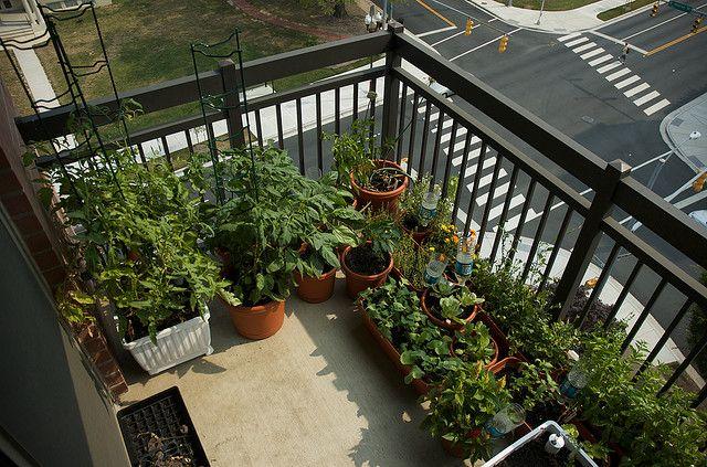 Balcony container garden design Teeny tiny shady