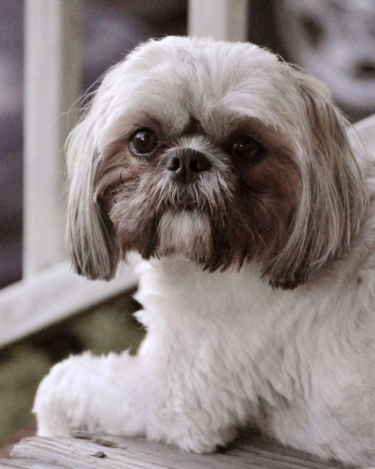 Chin-Poo – Allie's Pet Corner