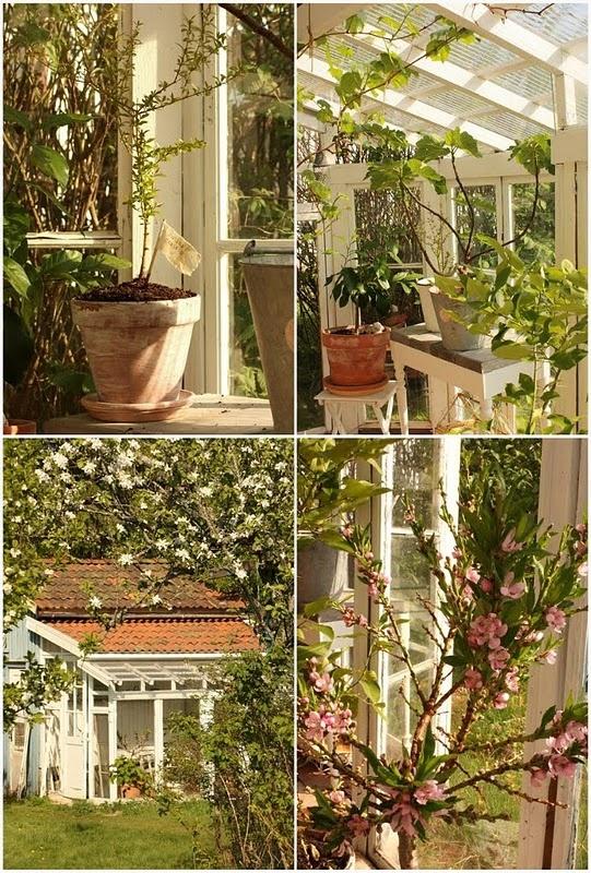 Giardino d 39 inverno idee per gli esterni pinterest - Giardino d inverno costo ...