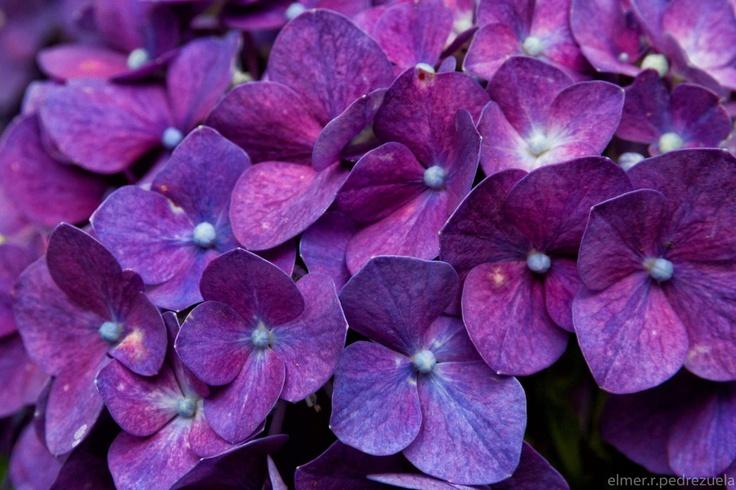 violets dst pinterest