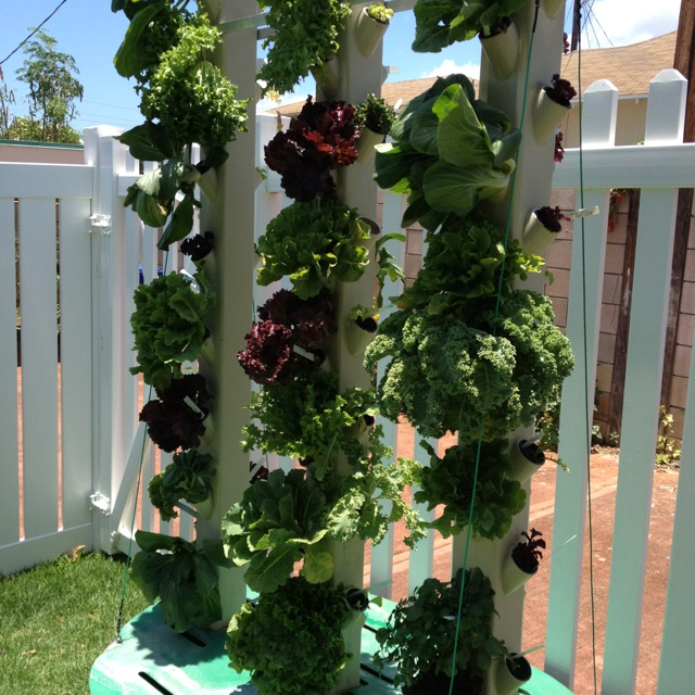 Pin by Outside The Door on Hydroponicaquaponic Pinterest