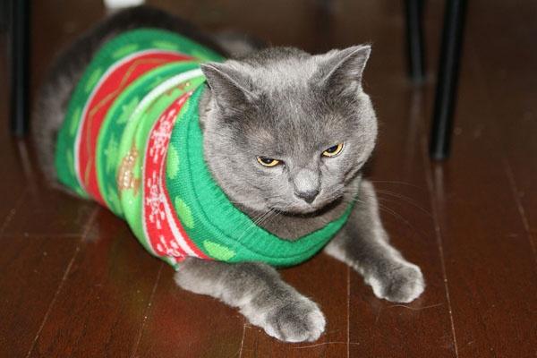 Cat christmas sweater | Christmas | Pinterest