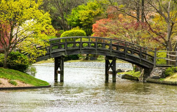 Japanese style bridge over pond print for Japanese style bridge