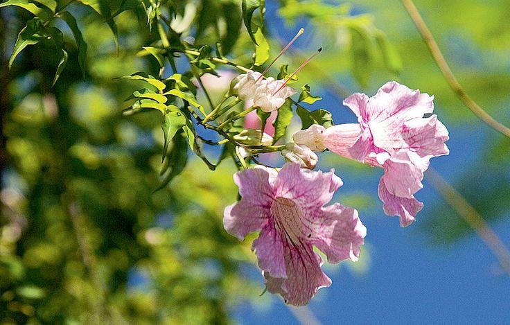 ano todo, com mais vigor na primavera e no verão, e tem flores