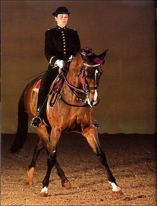 cadre noir de saumur equestrian style