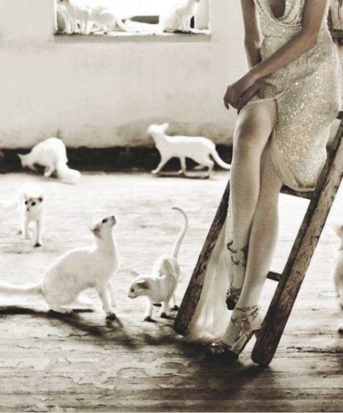 Cat woman...