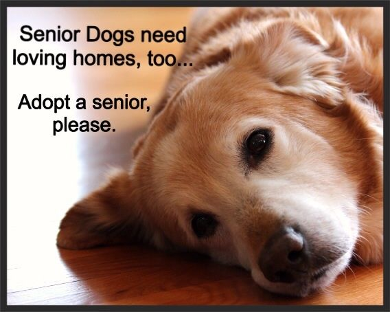 Senior photos with dog quotes quotesgram for What a dog needs