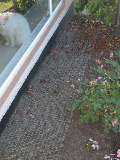 anti cat poop garden heirloom gardening pinterest. Black Bedroom Furniture Sets. Home Design Ideas