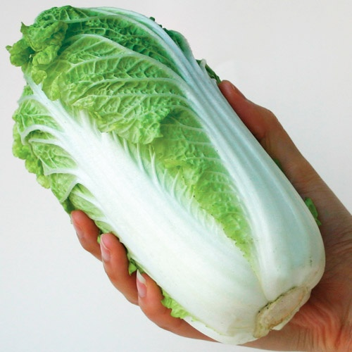How to Plant Chinese Cabbage foto