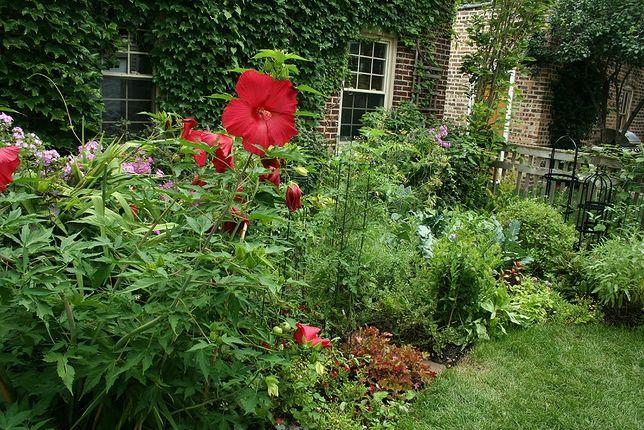 Food Forest Backyard : Backyard Food Forest in Chicago  Gardening  Pinterest