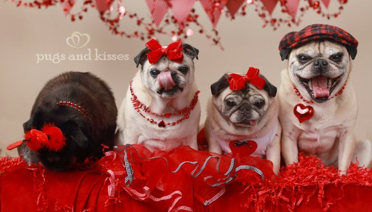 valentine's day pug ecards