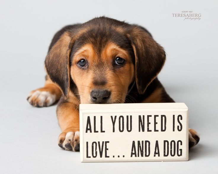 All you need is love and a dog life loves pinterest for What a dog needs