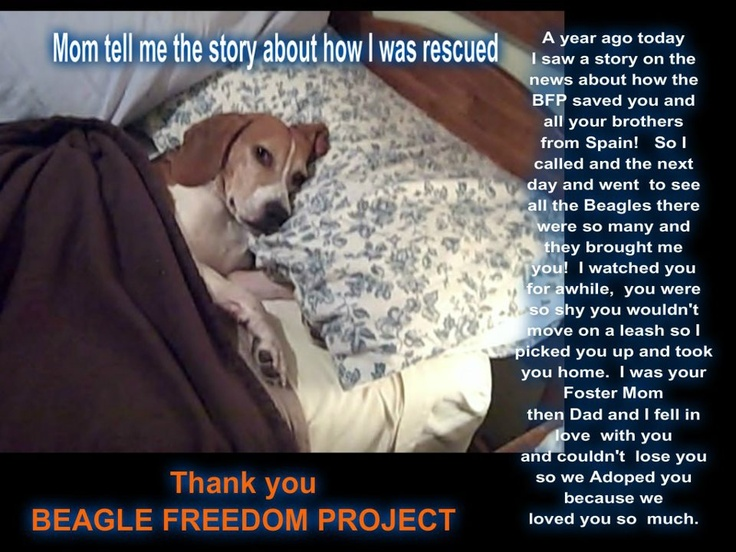 Beagle Freedom Project! | BEAGLE