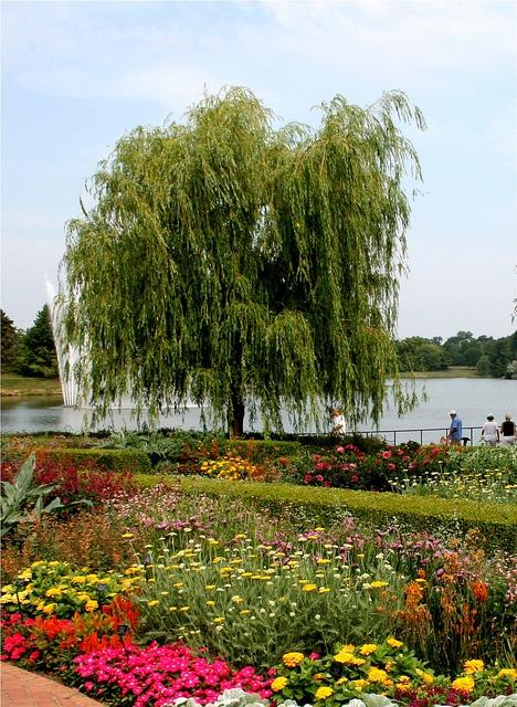 Chicago Botanic Garden Giardinaggio Pinterest