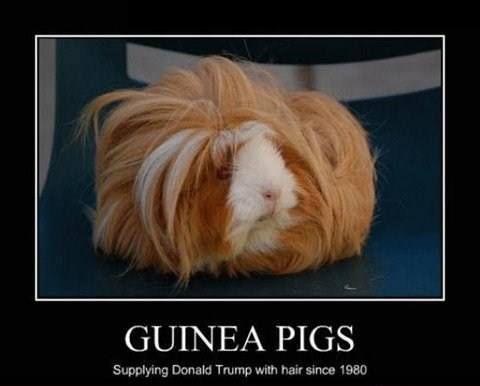 Guinea Pigs Meme   Slapcaption.com   The Best of ...