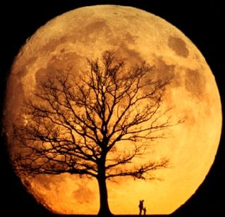 orange moon...this is an awesome picture