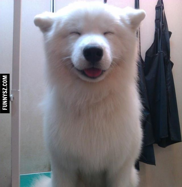 Very Happy Dog | happy dogs = happy people | Pinterest