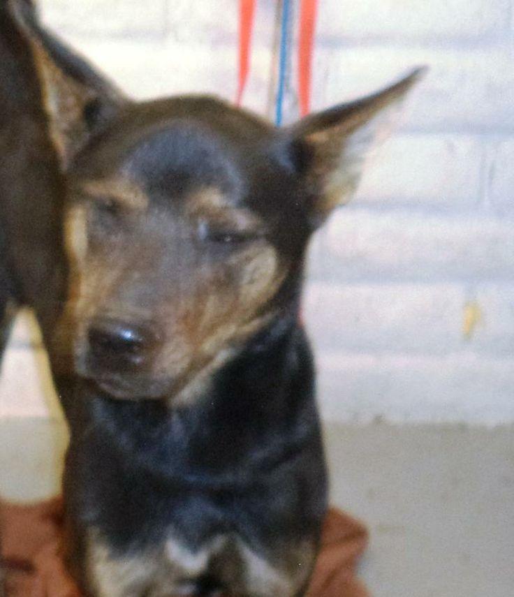 Arizona Dogs For Adoption Humane Society